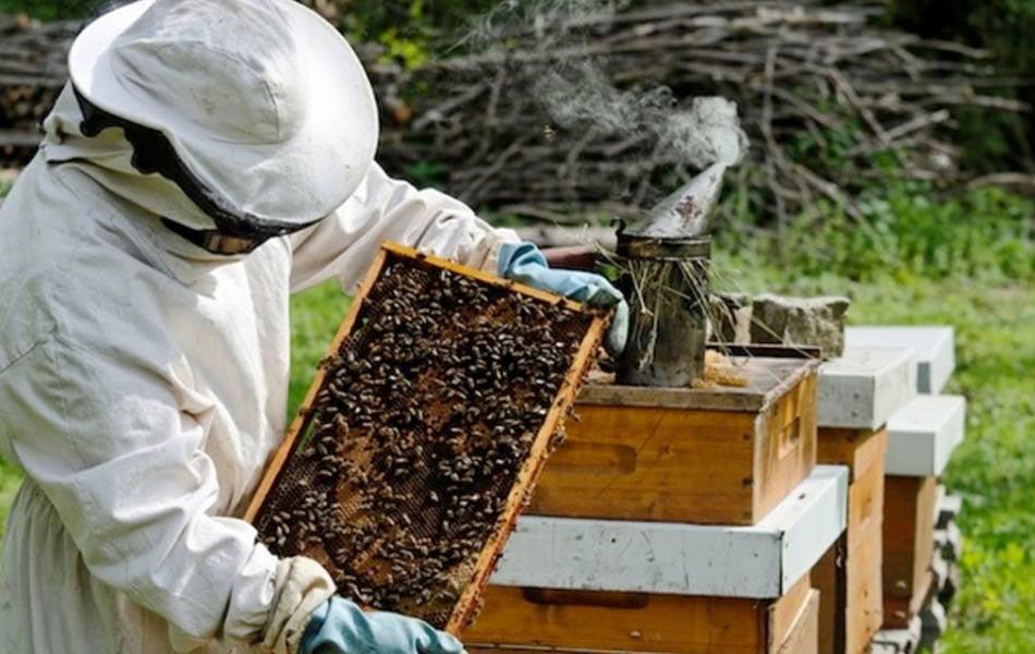 Το μέλι και η φύση εκπέμπουν SOS