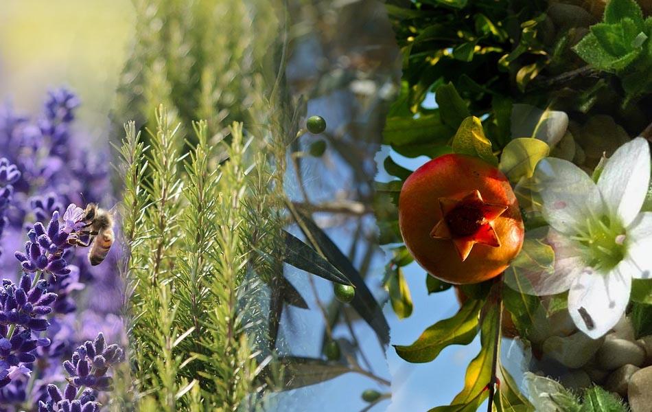 Υποστηρίξτε την ελληνική χλωρίδα με τοπικά φυτά στον κήπο σας