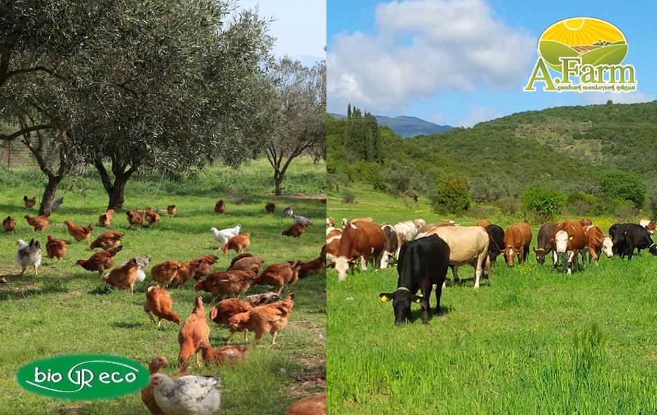 Βιολογική κτηνοτροφία: Επιστροφή στις καλές παραδοσιακές μεθόδους